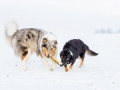 Hundemaedchen_Maggy_Gaia_Border_Rough_Collie_Mix_Hundefreunde_Freunde_Winter_Schnee_Hundefotografie_Marburg (9)