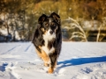 Hundemaedchen_Maggy_Border_Collie_Mischling_Mix_tricolor_Schnee_Winter_2015_Hund_Maedchen_Huendin (1)