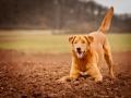 Aiko_Hundefotografie_Tierfotografie_Marburg_Hund_Fotograf_Christine_Hemlep_Fotografie_Mischling_ (2)