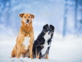 Aiko_Maggy_Tierfotografie_Hundefotografie_Marburg_Fotografin_Christine_Hemlep_Fotoshooting_Hund_Mischling_Bordercollie_Mix_Winter_Schnee (4)