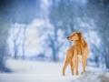 Aiko_Tierfotografie_Hundefotografie_Marburg_Fotografin_Christine_Hemlep_Fotoshooting_Hund_Mischling_Winter_Schnee (20)