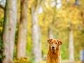Aiko_Tierfotografie_Hundefotografie_Marburg_Fotografin_Christine_Hemlep_Hund_Shooting_Mischling_Fotoshooting (1)