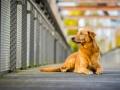 Aiko_Tierfotografie_Hundefotografie_Marburg_Fotografin_Christine_Hemlep_Hund_Shooting_Mischling_Fotoshooting (3)