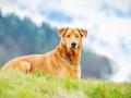 Aiko_Tierfotografie_Hundefotografie_Marburg_Fotografin_Christine_Hemlep_Mischling_Hund_Shooting_Fotoshooting