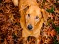 Aiko_Tierfotografie_Hundefotografie_Marburg_Fotografin_Christine_Hemlep_Mischlingshund_Mischling_Hund (1)