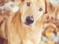 Aiko_Tierfotografie_Hundefotografie_Marburg_Fotografin_Christine_Hemlep_Mischlingshund_Mischling_Hund (10)
