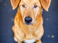 Aiko_Tierfotografie_Hundefotografie_Marburg_Fotografin_Christine_Hemlep_Mischlingshund_Mischling_Hund (11)