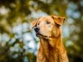 Aiko_Tierfotografie_Hundefotografie_Marburg_Fotografin_Christine_Hemlep_Mischlingshund_Mischling_Hund (12)