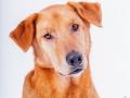 Aiko_Tierfotografie_Hundefotografie_Marburg_Fotografin_Christine_Hemlep_Mischlingshund_Mischling_Hund (3)