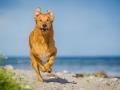 Aiko_Tierfotografie_Hundefotografie_Marburg_Fotografin_Christine_Hemlep_Mischlingshund_Mischling_Hund (6)