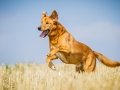 Aiko_Tierfotografie_Hundefotografie_Marburg_Fotografin_Christine_Hemlep_Mischlingshund_Mischling_Hund (8)
