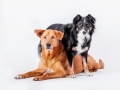 Aiko_Maggy_Tierfotografie_Hundefotografie_Marburg_Fotografin_Christine_Hemlep_Mischlingshund_Mischling_Bordercollie_Mix_Hund (1)