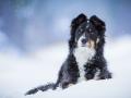 Maggy_Tierfotografie_Hundefotografie_Marburg_Fotografin_Christine_Hemlep_Fotoshooting_Hund_Mischling_Bordercollie_Mix_Winter_Schnee  (7)
