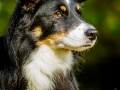 Maggy_Tierfotografie_Hundefotografie_Marburg_Fotografin_Christine_Hemlep_Hund_Shooting_Mischling_Maggy_Bordercollie_Fotoshooting (1)