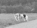 Hundetreffen_Treffen_Hunde_Spaziergang_Gaia_Langhaarcollie_Maggy_Border_Collie_Mischling_Lasse_Elo_Wehrda (8)