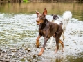 Gaia_Langhaarcollie_Maggy_Border_Collie_Rough_bluemerle_tricolor_Spencer_brauner_Dobermann_Hundefreunde_Freunde_Gassi (18)