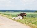 Hundemaedchen_Maggy_Gaia_Border_Collie_Rough_Langhaarcollie_Mischling_Spencer_Dobermann_Hundefreunde_Spaziergang_Treffen_Spiel_Spass (7)