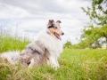 Hundemaedchen_Maggy_Gaia_Border_Collie_Rough_Langhaarcollie_Mischling_Besuch_Spencer_Dobermann_Hundefreunde_Tierfotografie_Marburg (34)