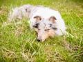 Hundemaedchen_Maggy_Gaia_Border_Collie_Rough_Langhaarcollie_Mischling_Besuch_Spencer_Dobermann_Hundefreunde_Tierfotografie_Marburg (35)