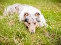 Hundemaedchen_Maggy_Gaia_Border_Collie_Rough_Langhaarcollie_Mischling_Besuch_Spencer_Dobermann_Hundefreunde_Tierfotografie_Marburg (36)