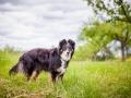 Hundemaedchen_Maggy_Gaia_Border_Collie_Rough_Langhaarcollie_Mischling_Besuch_Spencer_Dobermann_Hundefreunde_Tierfotografie_Marburg (4)