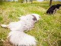 Hundemaedchen_Maggy_Gaia_Border_Collie_Rough_Langhaarcollie_Mischling_Besuch_Spencer_Dobermann_Hundefreunde_Tierfotografie_Marburg (40)
