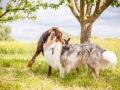 Hundemaedchen_Maggy_Gaia_Border_Collie_Rough_Langhaarcollie_Mischling_Besuch_Spencer_Dobermann_Hundefreunde_Tierfotografie_Marburg (42)