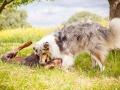 Hundemaedchen_Maggy_Gaia_Border_Collie_Rough_Langhaarcollie_Mischling_Besuch_Spencer_Dobermann_Hundefreunde_Tierfotografie_Marburg (45)