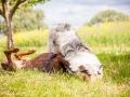 Hundemaedchen_Maggy_Gaia_Border_Collie_Rough_Langhaarcollie_Mischling_Besuch_Spencer_Dobermann_Hundefreunde_Tierfotografie_Marburg (46)