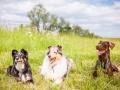 Hundemaedchen_Maggy_Gaia_Border_Collie_Rough_Langhaarcollie_Mischling_Besuch_Spencer_Dobermann_Hundefreunde_Tierfotografie_Marburg (50)