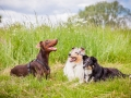 Hundemaedchen_Maggy_Gaia_Border_Collie_Rough_Langhaarcollie_Mischling_Besuch_Spencer_Dobermann_Hundefreunde_Tierfotografie_Marburg (53)