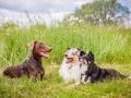 Hundemaedchen_Maggy_Gaia_Border_Collie_Rough_Langhaarcollie_Mischling_Besuch_Spencer_Dobermann_Hundefreunde_Tierfotografie_Marburg (54)