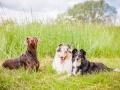Hundemaedchen_Maggy_Gaia_Border_Collie_Rough_Langhaarcollie_Mischling_Besuch_Spencer_Dobermann_Hundefreunde_Tierfotografie_Marburg (55)