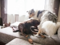 Hundemaedchen_Maggy_Gaia_Border_Collie_Rough_Langhaarcollie_Mischling_Besuch_Spencer_Dobermann_Hundefreunde_Tierfotografie_Marburg (57)