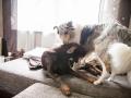 Hundemaedchen_Maggy_Gaia_Border_Collie_Rough_Langhaarcollie_Mischling_Besuch_Spencer_Dobermann_Hundefreunde_Tierfotografie_Marburg (58)