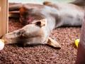 Hundemaedchen_Maggy_Gaia_Border_Collie_Rough_Langhaarcollie_Mischling_Besuch_Spencer_Dobermann_Hundefreunde_Tierfotografie_Marburg (72)