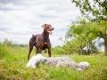 Hundemaedchen_Maggy_Gaia_Border_Collie_Rough_Langhaarcollie_Mischling_Besuch_Spencer_Dobermann_Hundefreunde_Tierfotografie_Marburg (8)