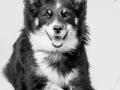 Hundefotografie_Tierfotografie_Marburg_Fotografin_Christine_Hemlep_Hund_Border_Collie_Mischling_tricolor_Maggy (3)