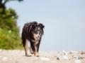 Hundemaedchen_Maggy_Border_Collie_Mischling_Strand_Ostsee_Klein_Waabs_Schleswig_Holstein_Urlaub_Hund_Meer_Sand (21)