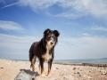 Hundemaedchen_Maggy_Border_Collie_Mischling_Strand_Ostsee_Klein_Waabs_Schleswig_Holstein_Urlaub_Hund_Meer_Sand (31)