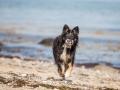 Hundemaedchen_Maggy_Border_Collie_Mischling_Strand_Ostsee_Klein_Waabs_Schleswig_Holstein_Urlaub_Hund_Meer_Sand (37)