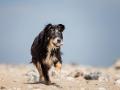 Hundemaedchen_Maggy_Border_Collie_Mischling_Strand_Ostsee_Klein_Waabs_Schleswig_Holstein_Urlaub_Hund_Meer_Sand (9)