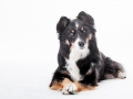 Hundefotografie_Tierfotografie_Marburg_Fotografin_Christine_Hemlep_Border_Collie_Mischlingshund_tricolor_Mix_Studio_senior_Maggy (33)