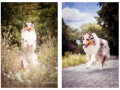 hundemaedchen_Gaia_Langhaarcollie_Collie_Hundeshooting_Shooting_Fotograf_Nina_Herr (4)