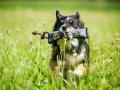 Hundefotografie_Tierfotografie_Hund_Marburg_Fotografin_Christine_Hemlep_August_Border_Collie_Mischling_tricolor_Maggy (9)