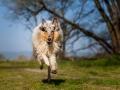 Hundemaedchen_Gaia_Langhaarcollie_Collie_Rough_bluemerle_unterwegs_Fahrrad_fahren_unterwegs (11)