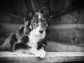 Tierfotografie_Hundefotografie_Marburg_Fotografin_Christine_Hemlep_Projekt_52wochenhunde_Miss_Maggy