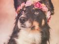 Tierfotografie_Hundefotografie_Marburg_Fotografin_Christine_Hemlep_Projekt_52wochenhunde_Miss_Maggy_studioaufnahme