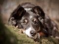 Hundefotografie_Marburg_Tierfotografie_Hund_Border_Collie_Mischling_Maggy_tricolor_Wald_Hundemaedchen (1)