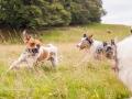 Hundemaedchen_Maggy_Gaia_Langhaarcollie_Border_Collie_Mischling_Wanderung_Hohesrodskopf_Hundefreunde_Forum_Vogelsberg_Spaziergang (21)